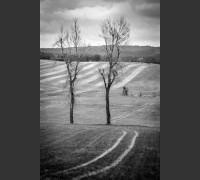 Dva stromy u Kláštera