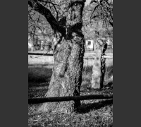 Strom v zahradě na podzim